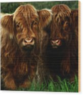 The Fluffy Cows Wood Print
