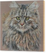 The Fluffy Feline Wood Print by Terry Kirkland Cook