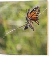 The Flutterby Wood Print