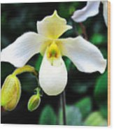 The Flying Orchid Wood Print