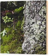 The Forest Floor Bluestone State Park West Virginia Wood Print
