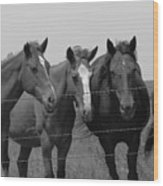 The Four Horses Wood Print
