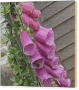 The Foxglove And The Bumble Bees Wood Print