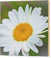 The Friendliest Flower Wood Print