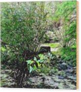 The Frog Pond Wood Print