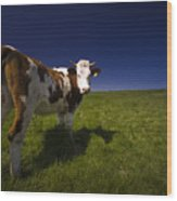 The Funny Cow Wood Print
