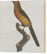 The Gag Aracari Wood Print