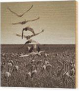 The Gathering - Sandhill Cranes Wood Print