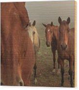 The Gauntlet - Horses Wood Print