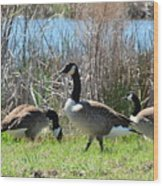 The Geese Are Back Wood Print