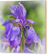 The Gentleness Of Spring 5 - Vignette Wood Print