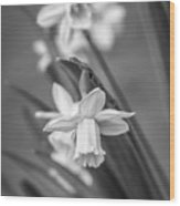 The Gentleness Of Spring Bw Wood Print