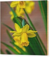 The Gentleness Of Spring Wood Print