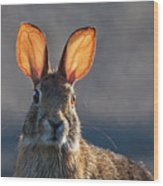 Golden Ears Bunny Wood Print