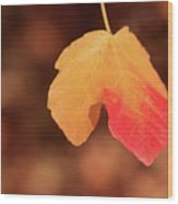 The Golden Leaf Of Fall Wood Print by Tracy Hall