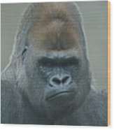 The Gorilla 4 Wood Print