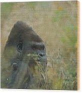 The Gorilla 5 Wood Print