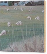 The Grazing Sheep Wood Print