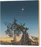 The Great American Eclipse On August 21 2017 Wood Print