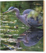 The Great Blue Heron Hunting For Food Wood Print