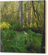 The Great Corkscrew Swamp Wood Print