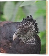 The Great Curassow 3 Wood Print