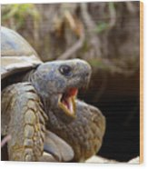 The Great Gopher Tortoise Wood Print