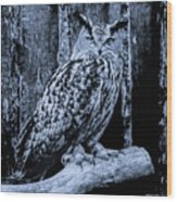 Majestic Great Horned Owl Bw Wood Print