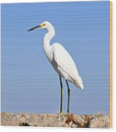 The Great Snowy Egret Wood Print