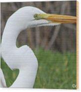 The Great White Egret Wood Print