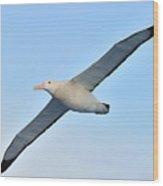 The Greatest Seabird Wood Print