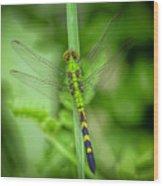 The Green Dragon Wood Print