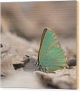 The Green Hairstreak Wood Print