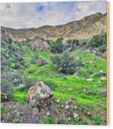 The Greening Of The Las Llajas Trail  Wood Print