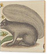 The Grey Fox Squirrel (sciurus Cinereus) Wood Print