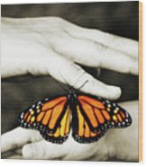 The Hands And The Butterfly Wood Print
