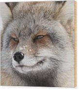 The Handsome Cross Fox Male Wood Print