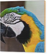 The Happy Macaw Wood Print