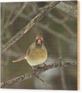 The Haridan - Northern Cardinal - Cardinalis Cardinalis  Wood Print