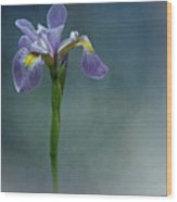 The Harlem Meer Iris Wood Print