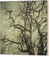 The Haunted Tree Wood Print