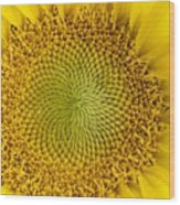 The Heart Of The Sunflower Wood Print