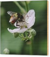 The Honey Gatherer Wood Print