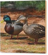 The Honeymooners - Mallard Ducks  Wood Print