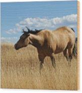 The Horse Wood Print
