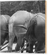The Horses Of Mackinac Island Michigan 03 Bw Wood Print