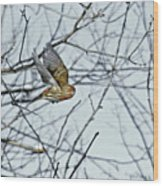The House Finch In-flight Wood Print