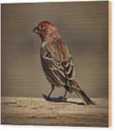 The House Finch Wood Print