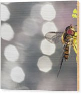 The Hoverfly Wood Print