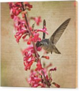 The Hummingbird And The Spring Flowers  Wood Print